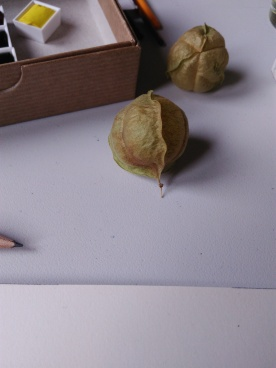 La semilla original /// The original seed