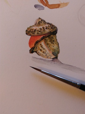 Detalle del eucaliptus /// Detail of an eucaliptus
