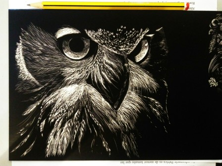 Eagle owl face - scratch board
