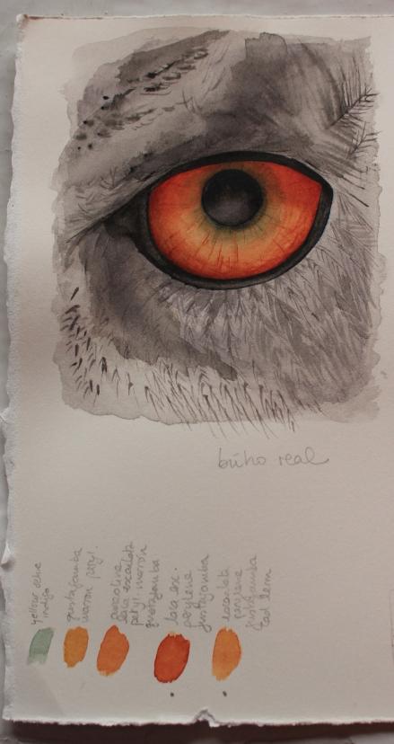 Eagle-owl eye - watercolour practice