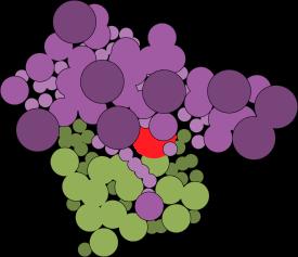 Ribosome test 1